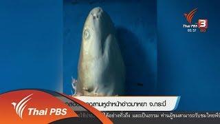 ตรวจสอบซากฉลามหูดำหน้าอ่าวมาหยา จ.กระบี่ (6 พ.ย. 61)