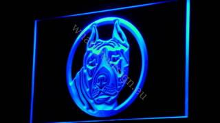 Staffordshire Bull Terrier - Led Neon Light Sign Display