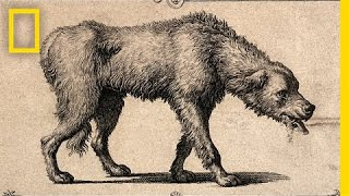 Crazy History Lesson: How the Rabies Vaccine Came to Be