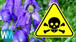 Top 10 Dangerous Plants That Can Literally Kill You