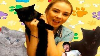 Мои Домашние Питомцы/ Сексуальные Коты и Няшечки// Совместное Видео///Desh Pop