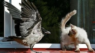 Как кошки боятся мышей и птиц! Видео приколы!