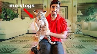 MY NEW PET TIGER !!!