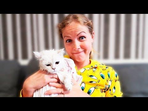 КУПАЕМ КОШКУ ЭЛЬКУ ПЕРВЫЙ РАЗ ЧТО ОНА ЧУВСТВУЕТ??? и подарки для нашей кошки!!!