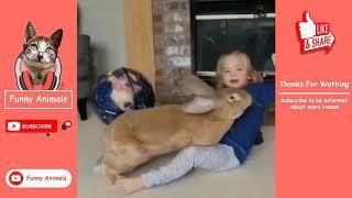 Top 40 Animal Videos | 10 Minutes