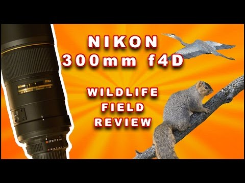 Nikon 300 f4 Wildlife Field Review w/ example photos