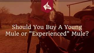 Buying A Mule - Should You Buy A Young Mule or An \