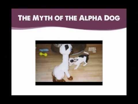 Merrick Pet Care's Dogington University - Victoria Stilwell