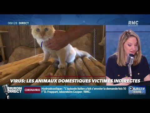 Virus: les animaux domestiques victimes indirectes