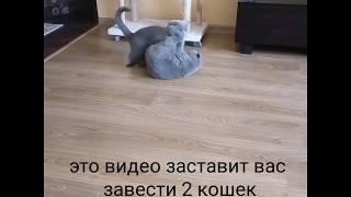 Это видео заставит тебя завести двух кошек