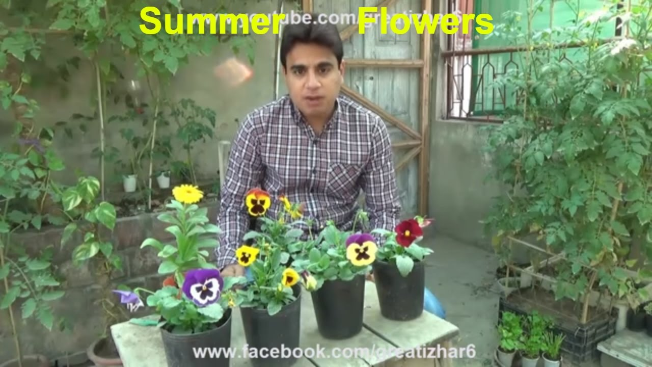 Summer Season Flowers List Popular Summer Flowers Flower For