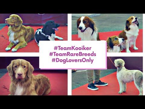 DOG SHOW #3 - Bordeaux 2019  - Team Kooiker & Rare Breeds