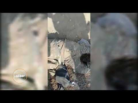 Армянские мертвые солдаты которые умерли не за что