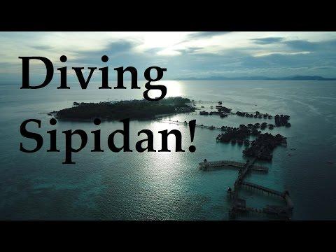 Best Day Ever! Diving Sipadan, Sharks, Turtles, Bumphead Parrotfish, Drone Footage Of Mabul Island
