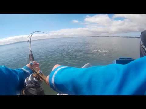 Kaipara Fishing, South Head Style