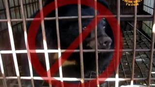 Animals Asia wins release of bears from Vietnam bile farm after 3-year campaign