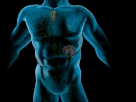 The Lymphatic System, Part 1
