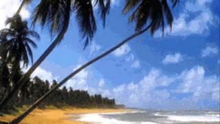 Mondo Bongo - Rockaway Beach (Ramones cover)
