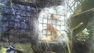 Birds using my Nesting Dispenser Quad