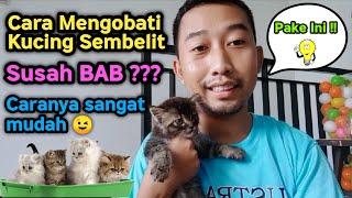 Cara Mengobati Kucing Sembelit   Susah Buang Air Besar