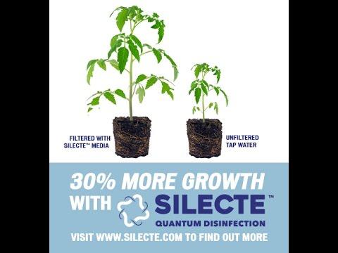 Growing Marijuana Using Reverse Osmosis