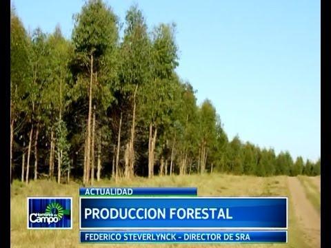 produccion forestal 25 05 2014 youtube On produccion de plantones forestales
