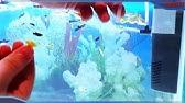 Купить. Сменная крупнопористая губка fluval предназначена для аквариумов fluval chi 19л и fluval chi 25л. В комплект входят две поролоновые губки.