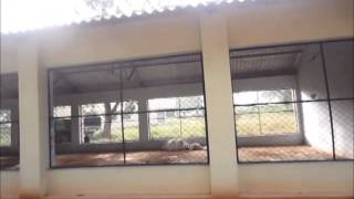 DEEP LITTER SYSTEM OF POULTRY SHED