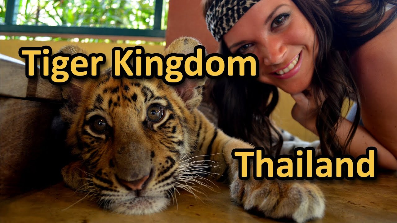 Tiger Kingdom in Chiang Mai Thailand - YouTube