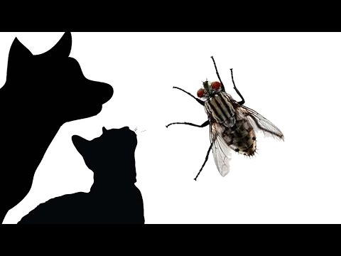 CAT GAMES - LITTER BOX FLY (FOR CATS ONLY)