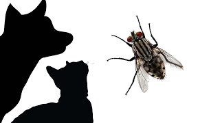CAT GAMES - LITTER BOX FLY (FOR CATS ONLY) thumbnail