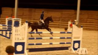 2015 12 05 stallion doree first show jumping training with yoeri braem in hd