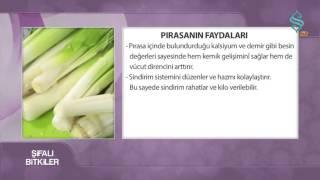 Pırasanın faydaları- Şifalı Bitkiler - 2 Kasım 2015