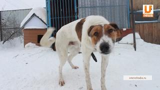 UTV. Появится ли в Оренбурге приют для животных?