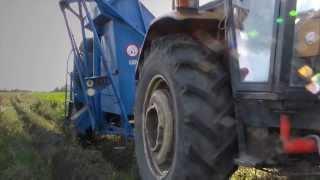 Kopanie ziemniaków - jesień 2013   Kombajn Bolko i Ursus C-360