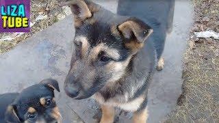 Бездомные щенки в Новый Год СОБАКИ Кормим бездомных щеночков