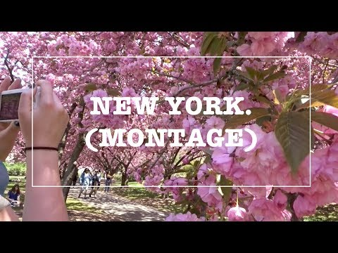 NYC TRAVEL MONTAGE | CENTRAL PARK, EMPIRE STATE, BUTTERFLIES & BROOKLYN