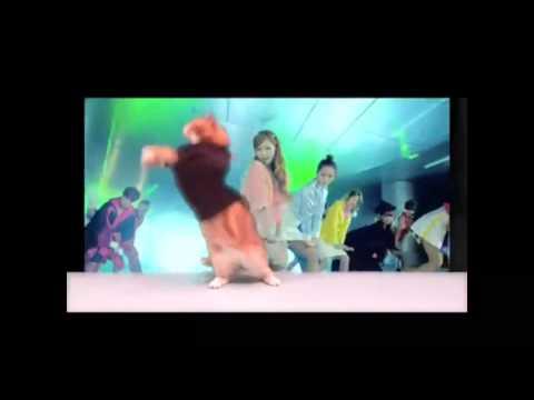 gato bailando gangam style