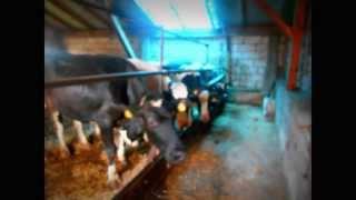 Zwierzęta na moim gospodarstwie 2013