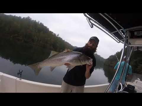 Carters Lake Fall Striper Fishing By Backwoods Fishing Guide
