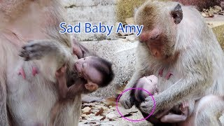 Million Heartbreaking Video Show Baby Amy Crying Loudly / Why Amara Try To Wean Milk Amy ? PTM 1304