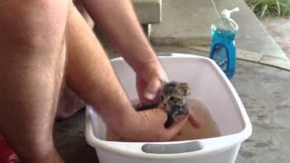 Washing The Kitten