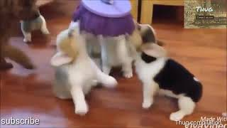 YOU LAUGH YOU LOSE - FUNNY DOGS AND CATS COMPILATION#1..........MUST WATCH😂🤣