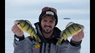 JUMBO Perch Fishing on Lake Simcoe