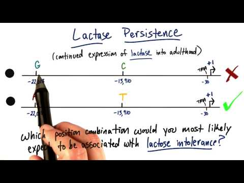 Lactase Persistence - Tales from the Genome