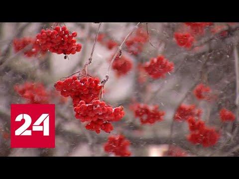 Снег стеной и гололед: Тюмень во власти непогоды - Россия 24