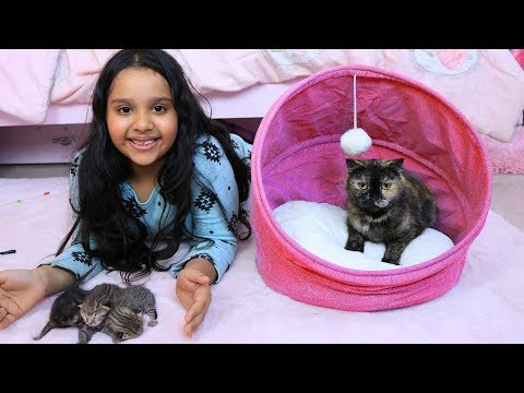 قطة شفا ولدت !!!
