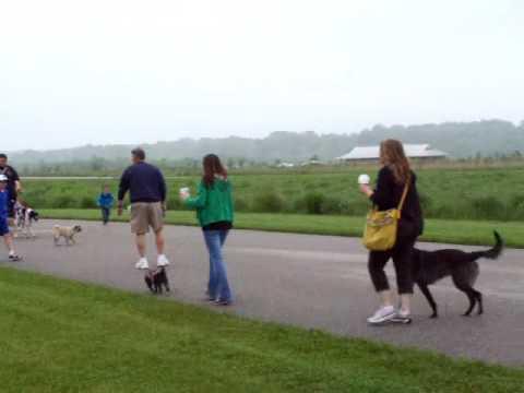 Doggie Dash 5k Run 1 Mile Walk