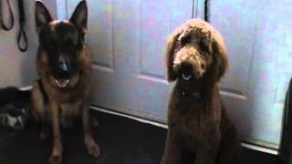 Alla Gurova Dog Training Ottawa Www.k9ottawa.com