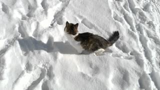 Писька в снегу
